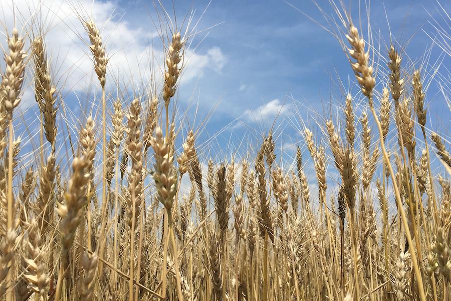 信州産小麦粉100%使用